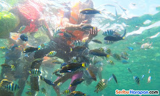 snorkeling spot pulau putri