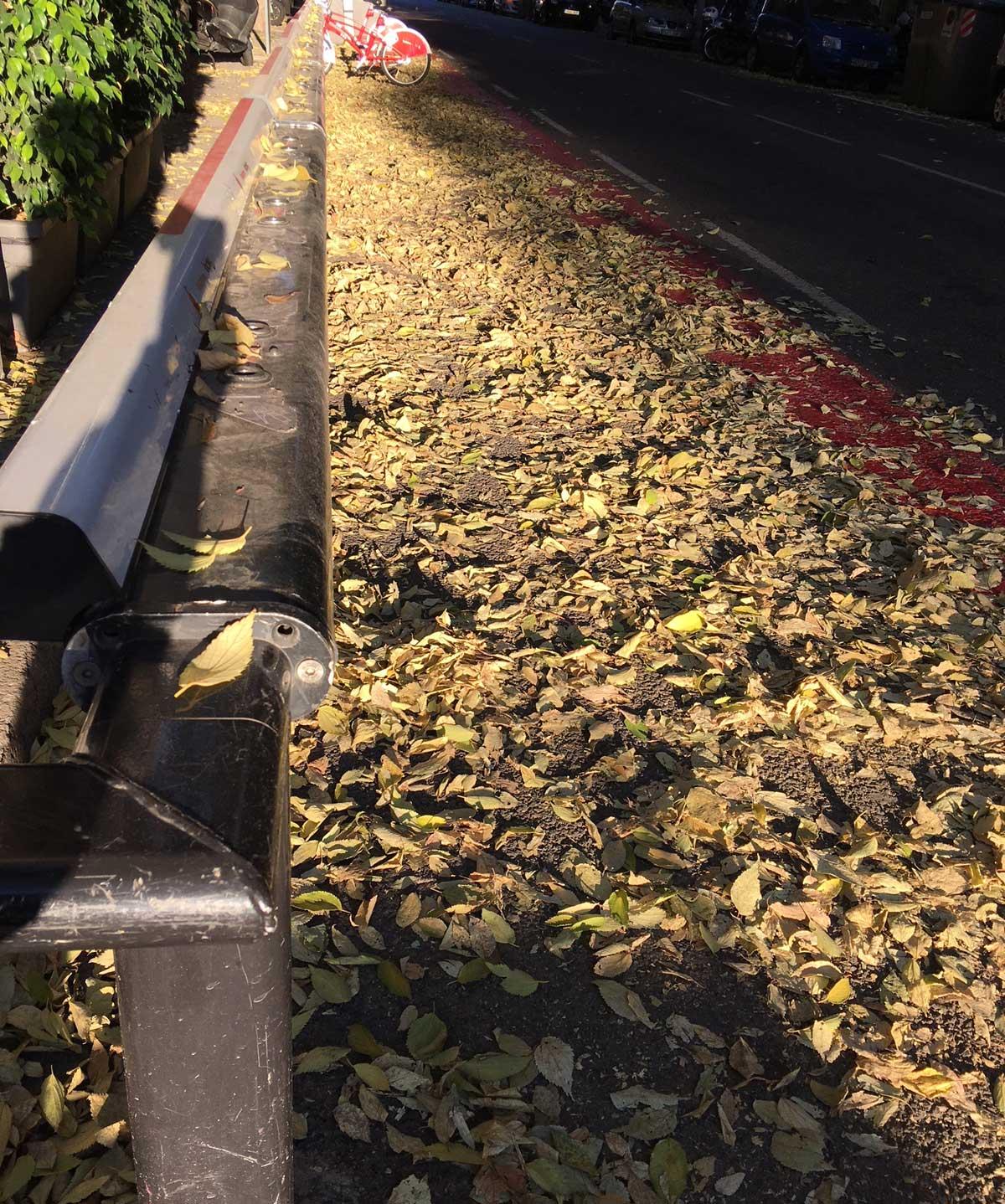 Caída otoñal de hojas. Ensanche izquierdo. Barcelona, nov. 2017