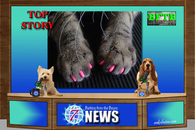 BFTB NETWoof News reports on bill to outlaw declawing cats in New York