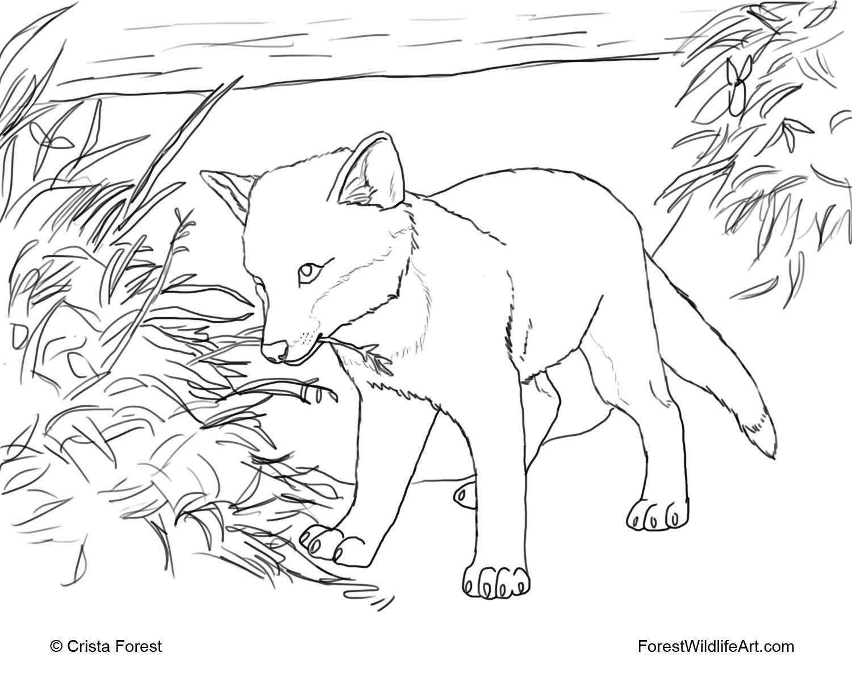 Realistic Animal Coloring Pages - Eskayalitim