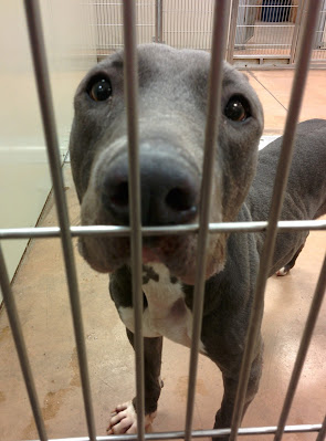 How you can Help Animal Shelters