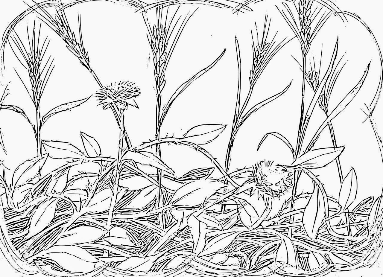 Wheat And Weeds Coloring Page
