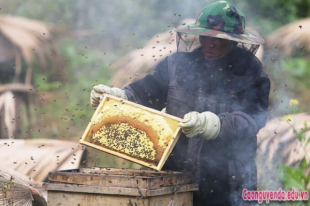 Công việc nuôi ong bạc hà trên cao nguyên đá Đồng Văn