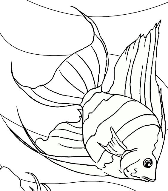 terbaru 28 gambar ikan hitam putih polos