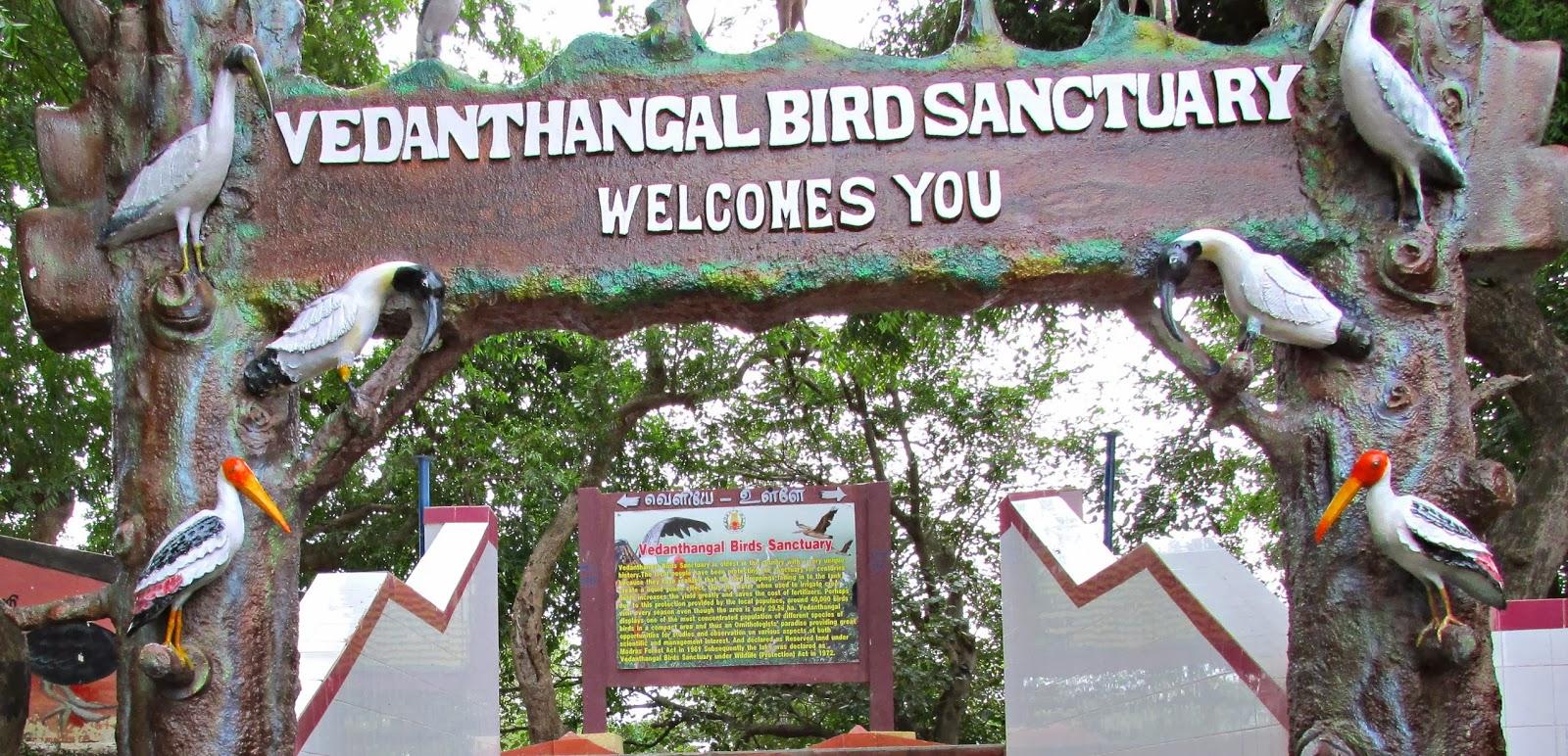 PhOto SyntHesiS: Vedanthangal Bird Sanctuary