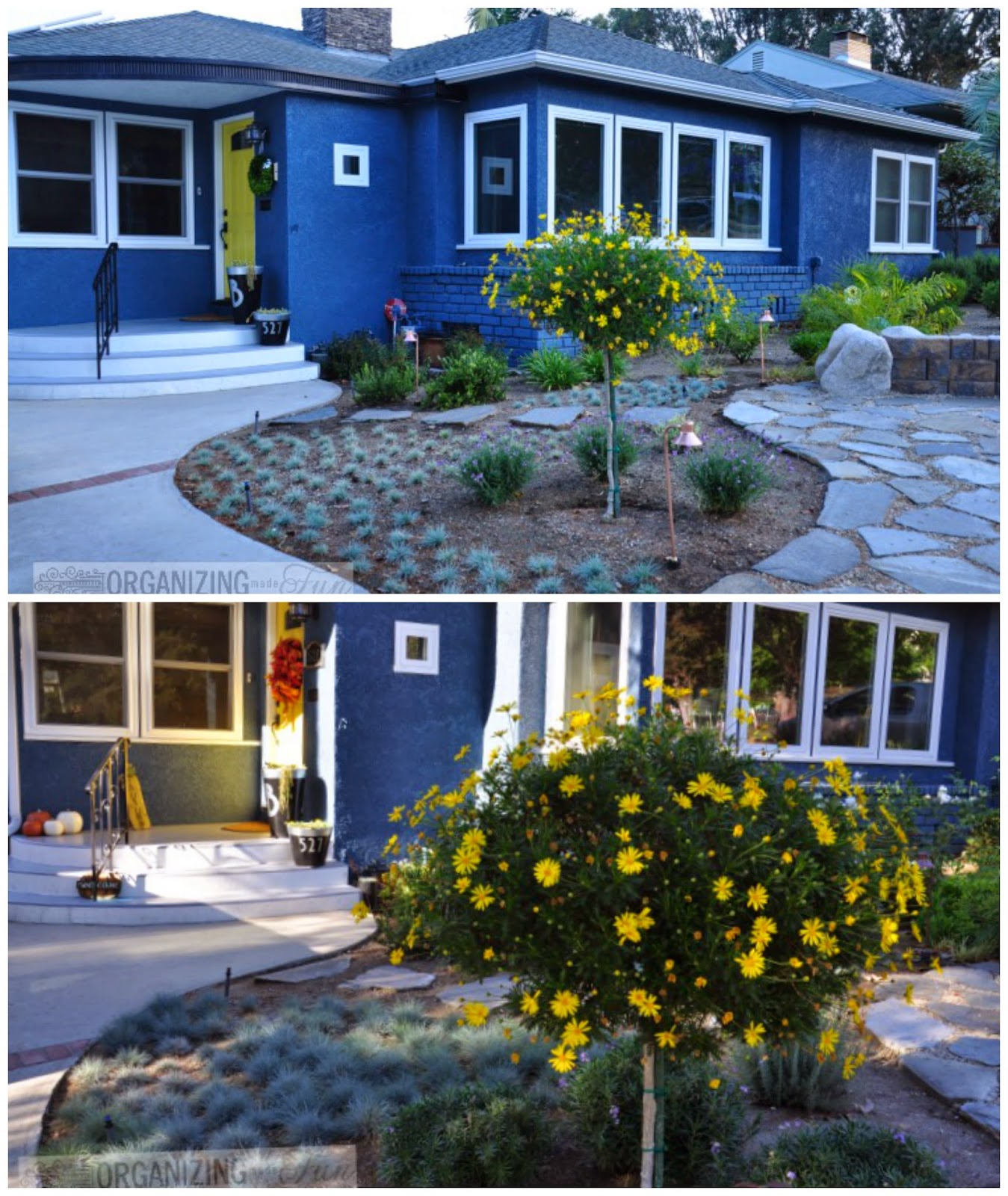 Front house curb appeal and drought tolerant six months apart :: OrganizingMadeFun.com