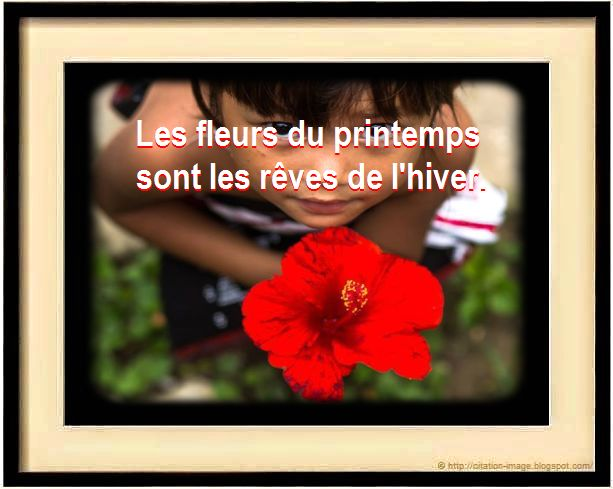 Citation sur fleur de printemps
