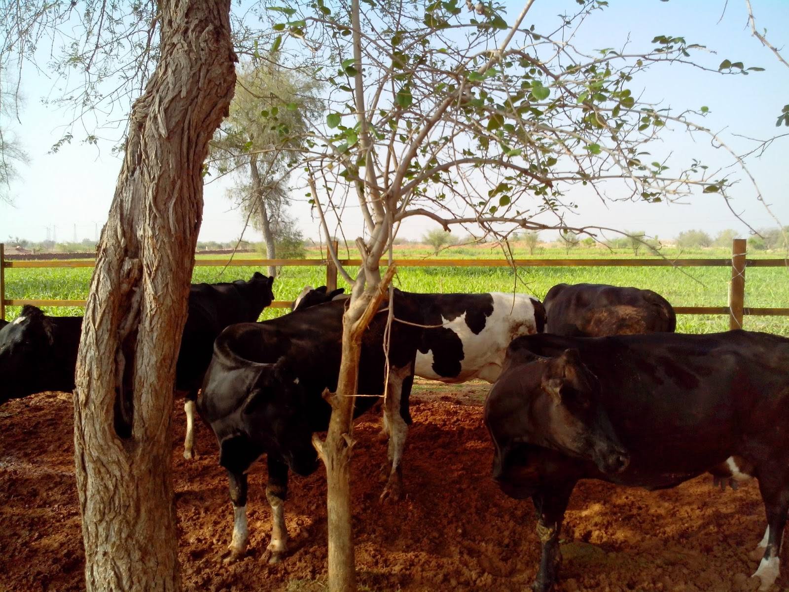 How To Start Dairy Farming In India-8182