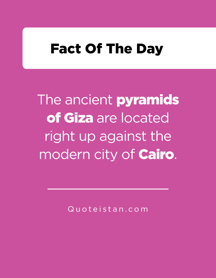 The ancient pyramids of Giza are located right up against the modern city of Cairo.