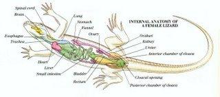 Sistem Reproduksi Pada Hewan (Materi Lengkap)
