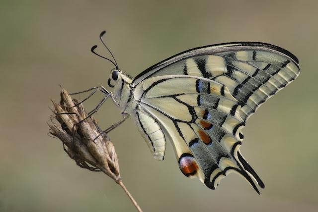 Πεταλούδες, οι υπέροχες!
