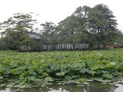 源平池(鶴岡八幡宮)