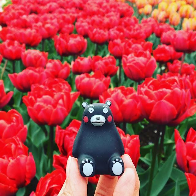 45 Hình ảnh hoa Tulip đẹp, Ý nghĩa của hoa Tulip & biểu tượng