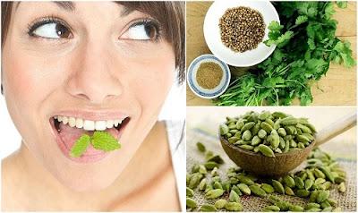 Rafraîchit le souffle de la bouche avec des plantes