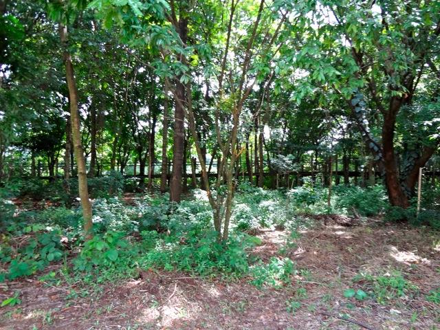 Parque Villa-Lobos - Circuito das Árvores