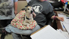 1/13/13 Morgan Male Senior Jack Russell Terrier Beckly WV Shelter CLIC PIC