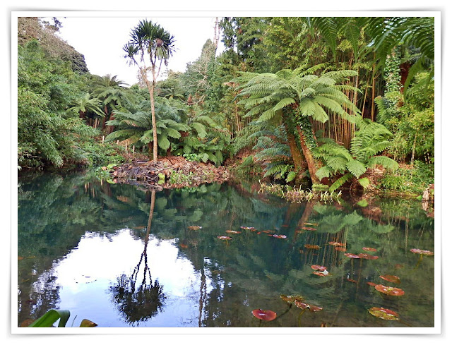 The jungle at the Lost Gardens of Heligan