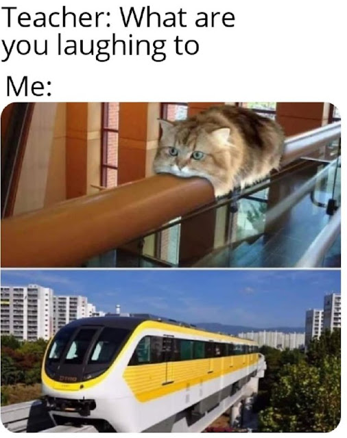Cat will commit self deletus