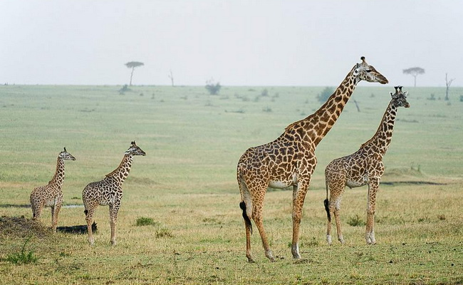 www.xvlor.com Serengeti National Park is spectacular wildlife in Mara and Simiyu