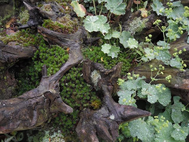 kompozycja roślinna w karpie drzewnej