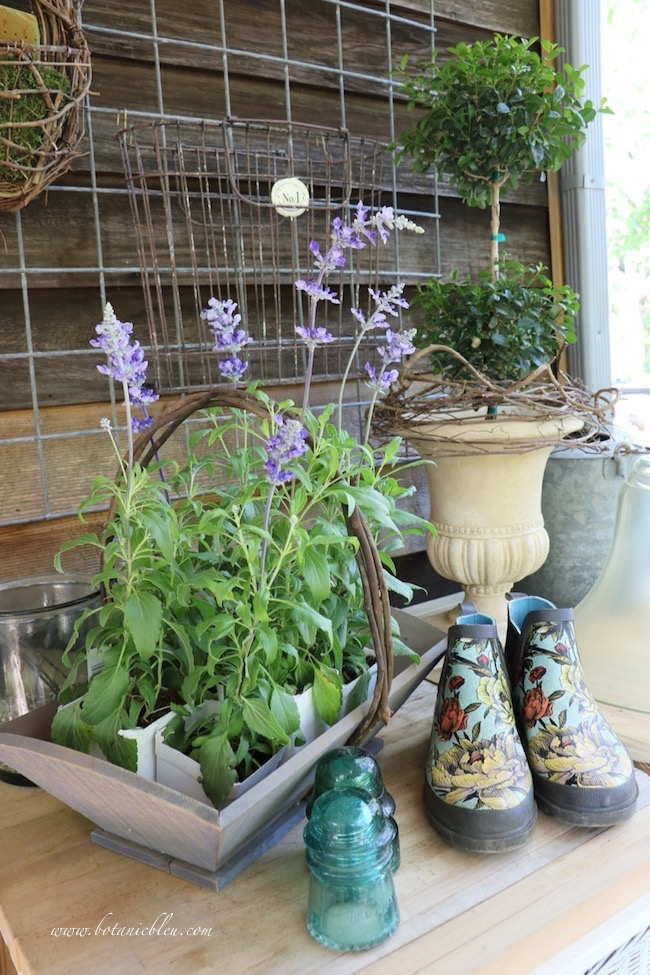 French Wire Basket With Blue Sage on Potting Bench