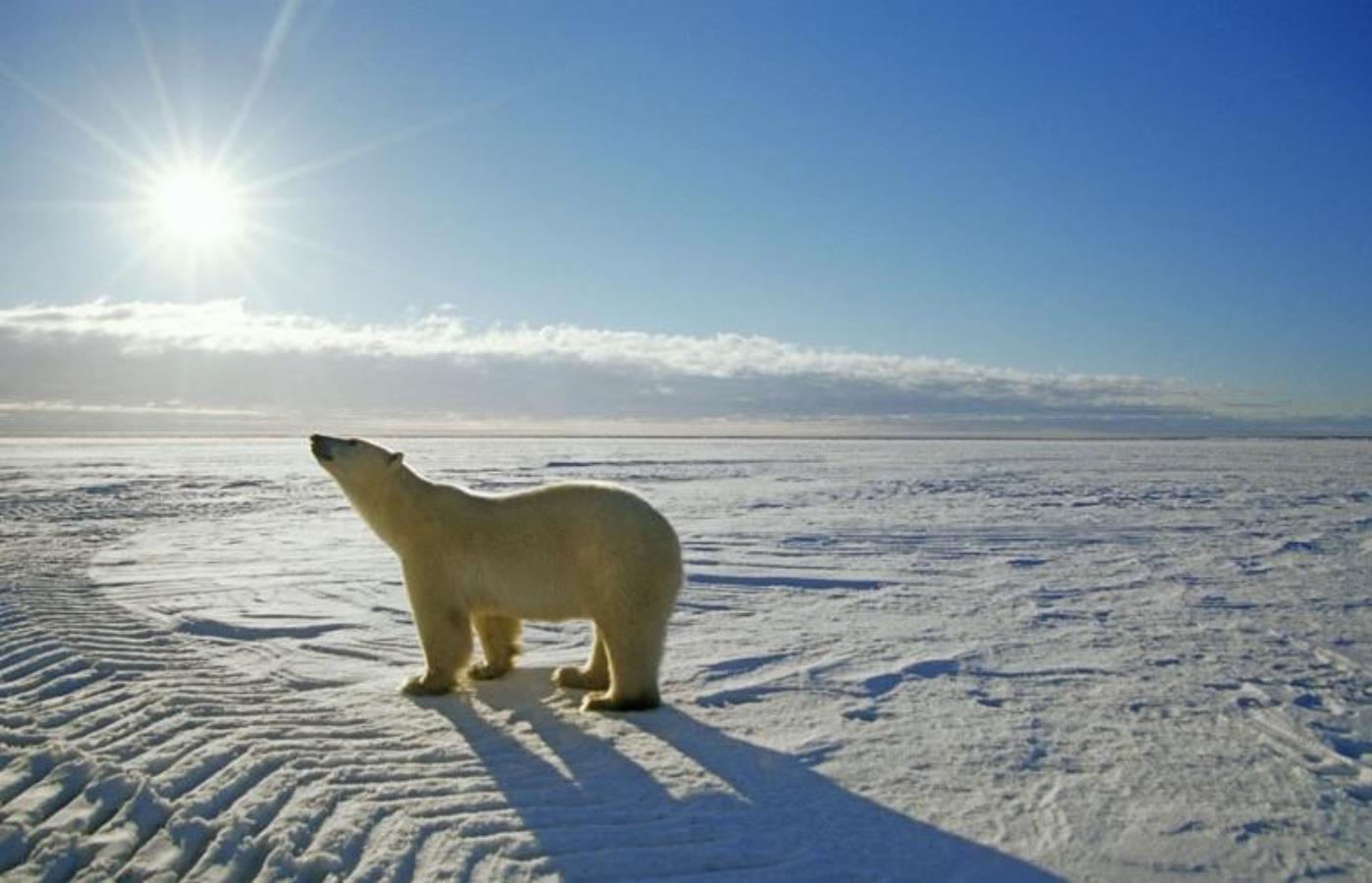 аксессуар крайний север россии фото поросят