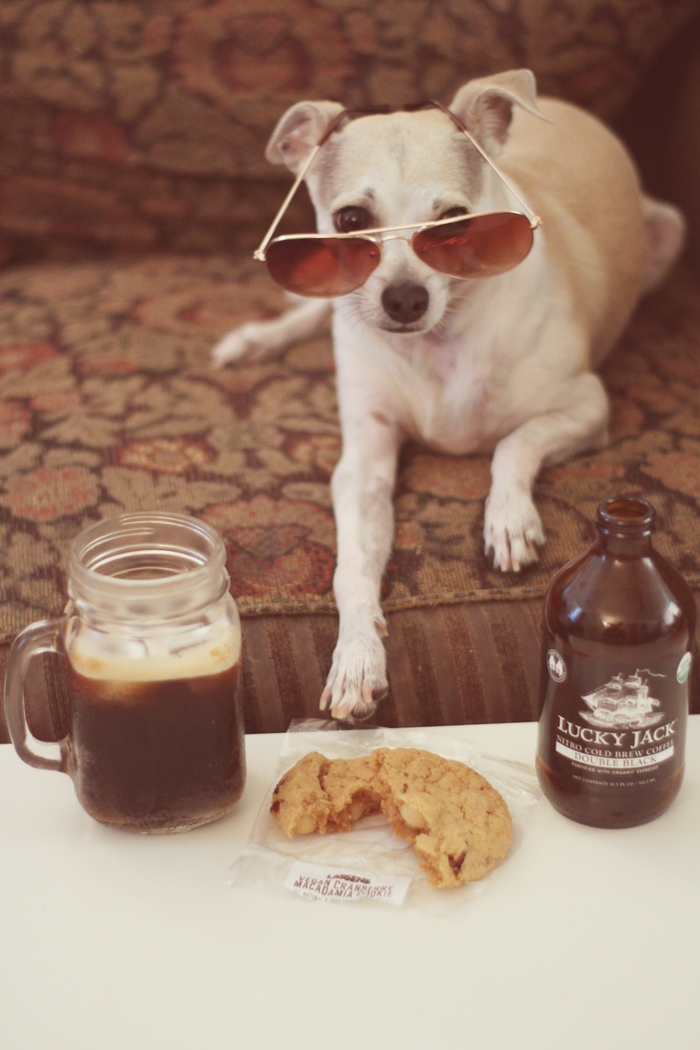 Image Result For Can Dogs Drink