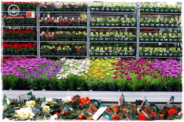 Gartenblog Topfgartenwelt Eröffnung Gartencenter Dehner Salzburg: Balkonblumen, Sommerblumen