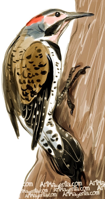 Common Flicker sketch painting. Bird art drawing by illustrator Artmagenta