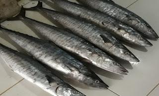 Cara Budidaya Ikan Lele Pemula Hemat Pakan Dengan Hasil Menguntungkan