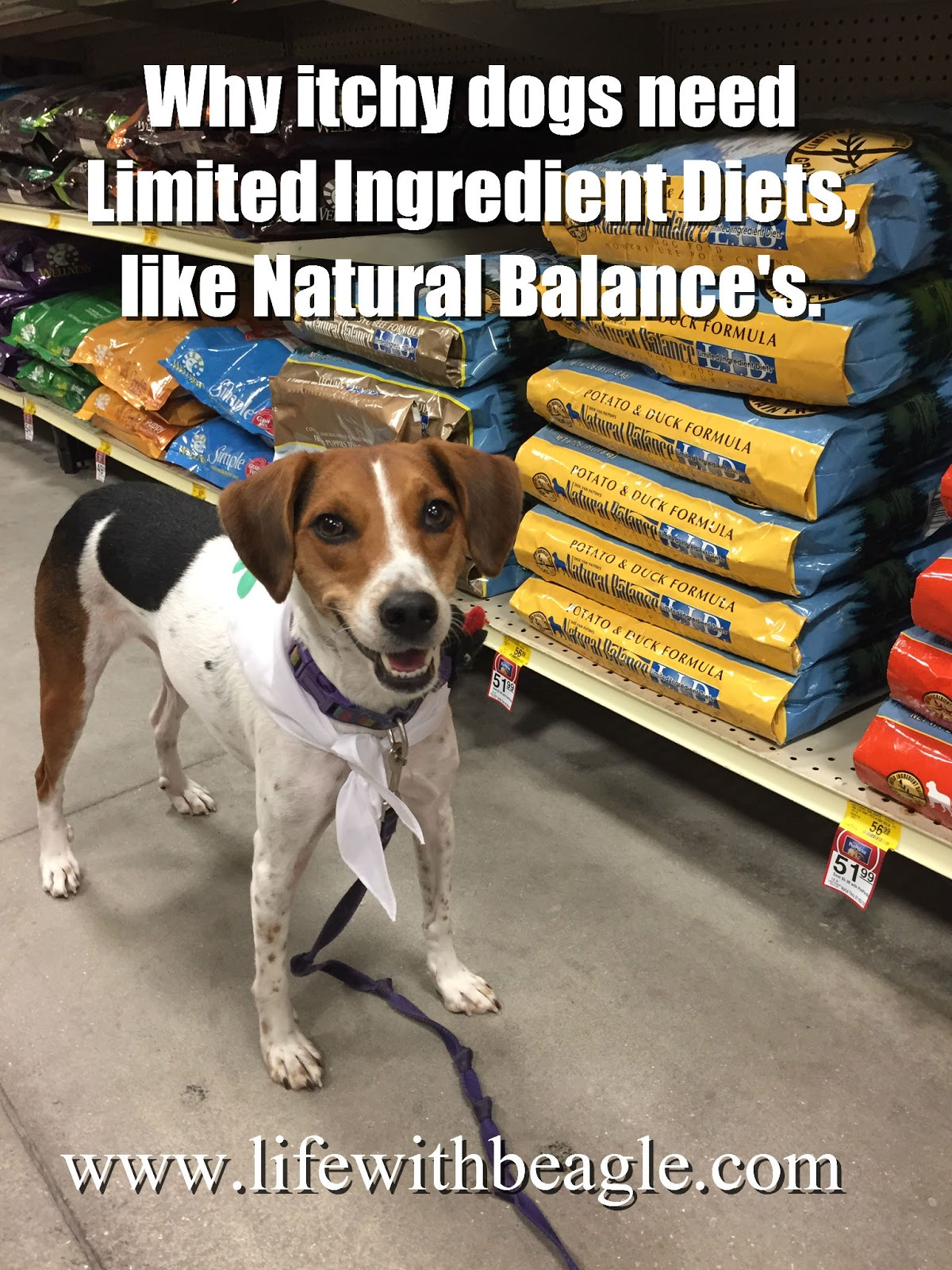 Life With Beagle: Limited ingredient diets for allergy-suffering ... | Natural Balance Dog Food Allergies
