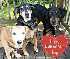 rescue dogs mixed breed national mutt day
