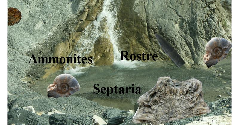 fossiles dans les alpes de haute provence
