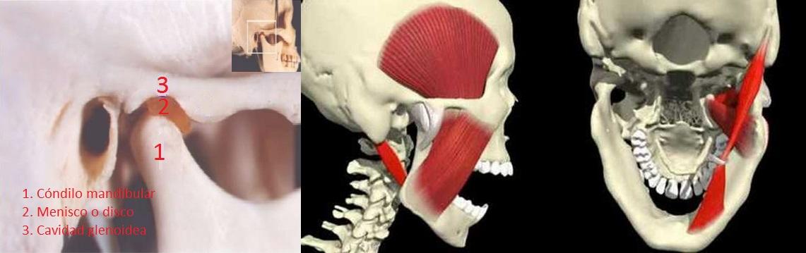 FISIO GARGON - Fisioterapia y Osteopatía: PATOLOGÍA DE LA ATM Y CÓMO ...