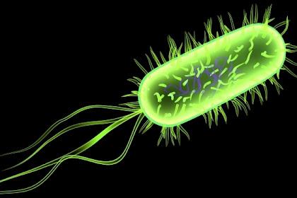 Apakah Yang Dimaksud dengan E.coli? Coli Online? Ternyata Bukan, Rupanya Penyakit