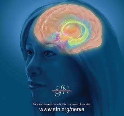 Θεμελιώδεις Έννοιες Νευροεπιστημών και οι βασικές αρχές τους.