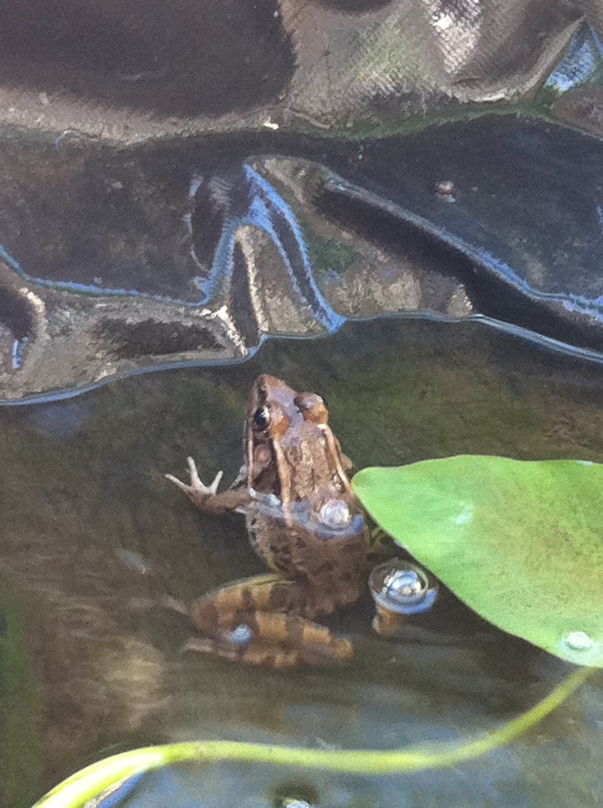 Austin Frog Blog The Difference Between Frogs And Toads