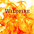 Wildfire! Now Available!