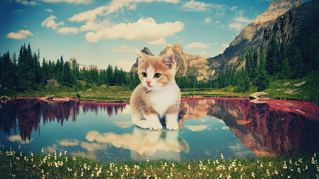 Kitten Nature Background