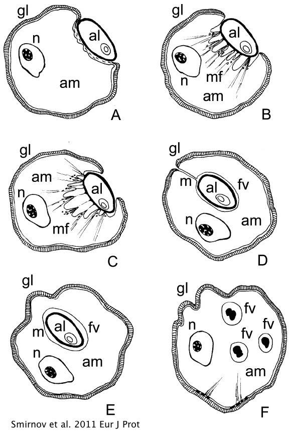 euglena diagram blank automotive wiring czeshop images source