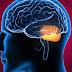 Célula que vai do intestino ao cérebro está ligada à esclerose múltipla