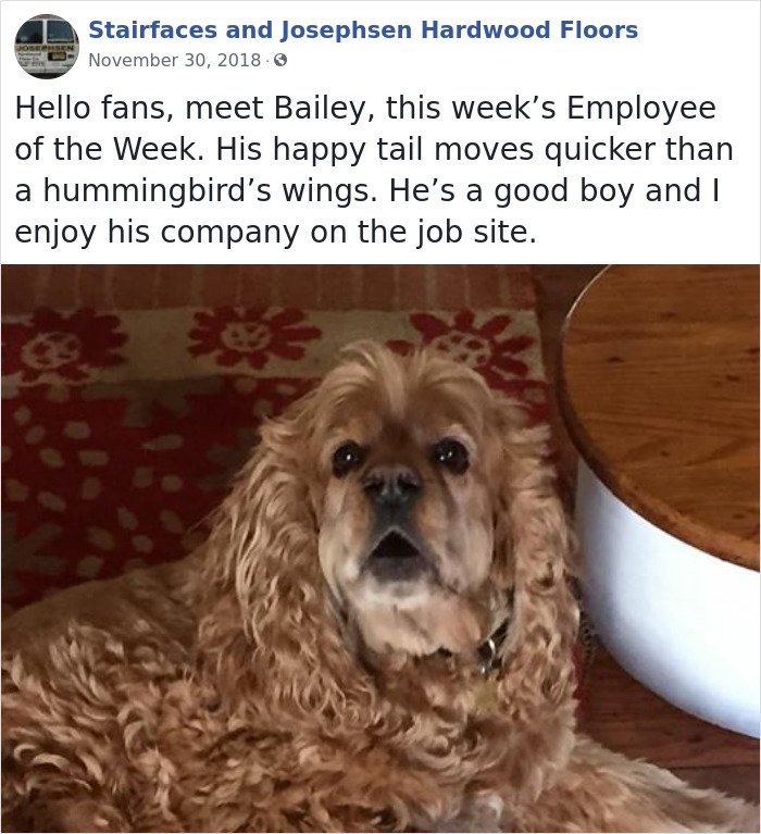 30 Hilarious Dogs That Were The 'Employees Of The Week'