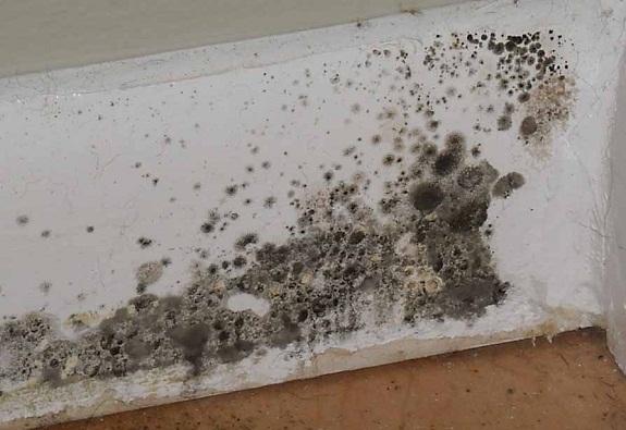 Odgrzybianie piwnic - grzyb i pleśń w piwnicy
