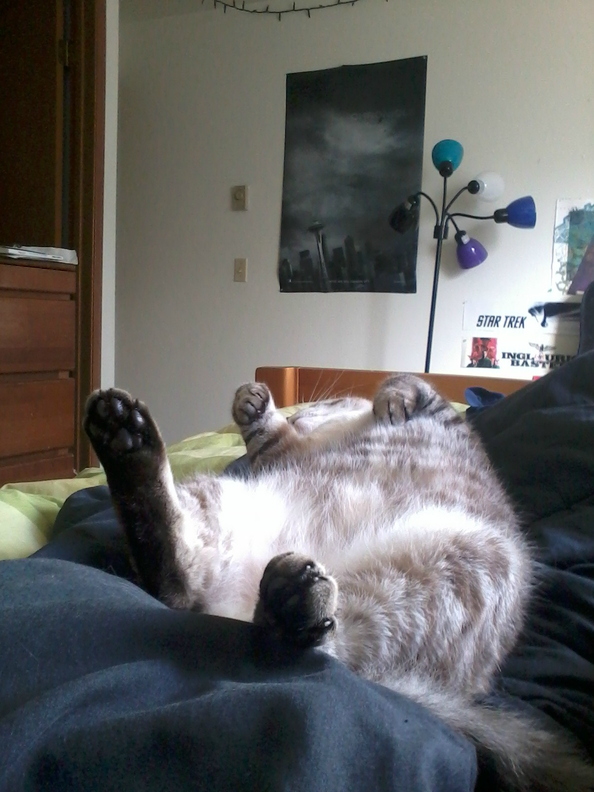 Funny cats - part 3 (42 pics) | Amazing Creatures