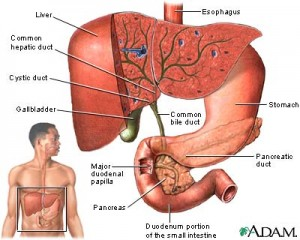 obat penyakit liver paling manjur
