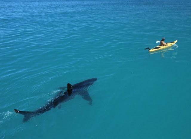 Kamu Anak Pantai? Eits, Foto Mengerikan Ini Buktikan Tak Selamanya Laut Itu Indah, Asli Bikin Merinding!