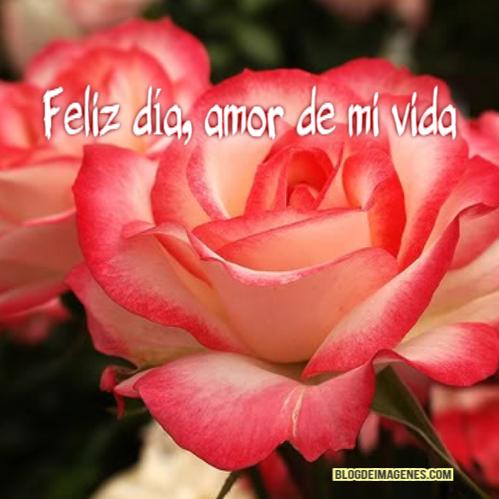 flor día del amor (17)