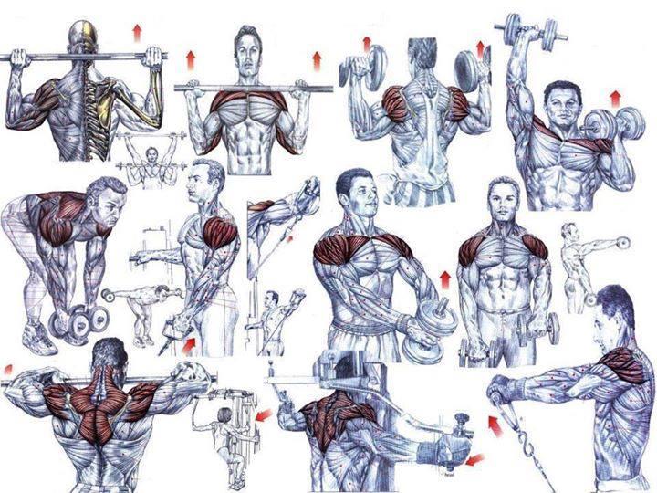Shoulder Exercises For Beginning Bodybuilders - all ...