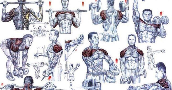 Shoulder Exercises For Beginning Bodybuilders - all