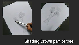 How to draw Trees, step by step tutorial, best drawing of tree, easy drawing of tree, easy tree drawing, best Trees graphite drawing , crown part of tree, drawing for begginers